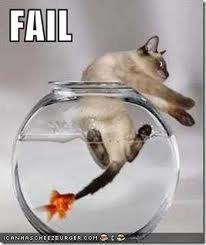 fail:fish:cat