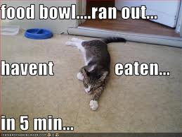food bowl ran out