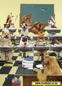 catsdogsschool