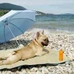 dog suntanning