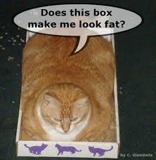 box:fat