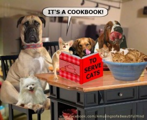 cat cookbook