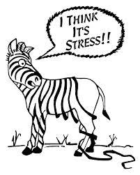 zebra losing spots